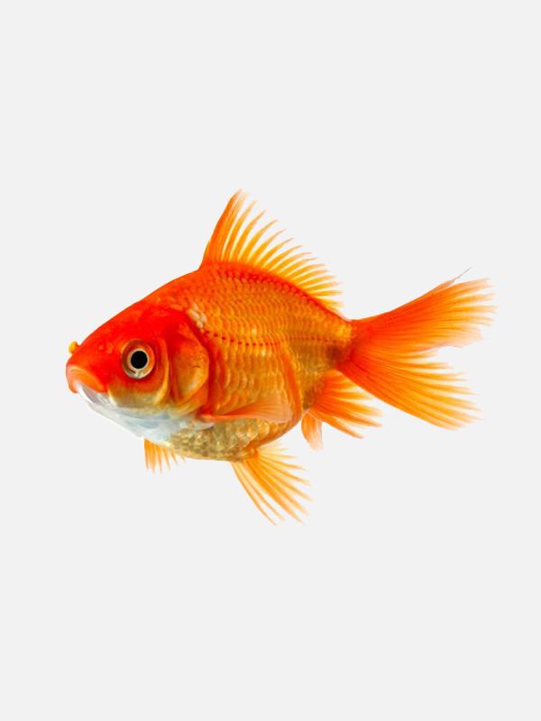 Aparição de Peixe